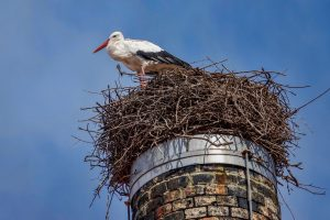 191014-14-Vista-Allegra-Stork