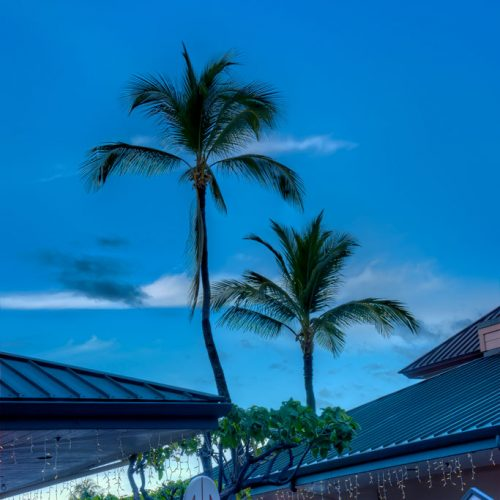 Photos-200114-3-King's-Shop-palms-at-dusk