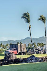 Photos---200129-01-Mauna-Lani-trimming-palm-trees